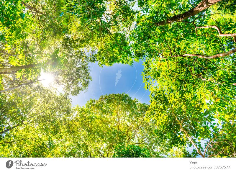Nature green forest with big trees nature jungle sky top bright summer yellow autumn beautiful sunny sunlight landscape blue spring season background plant park