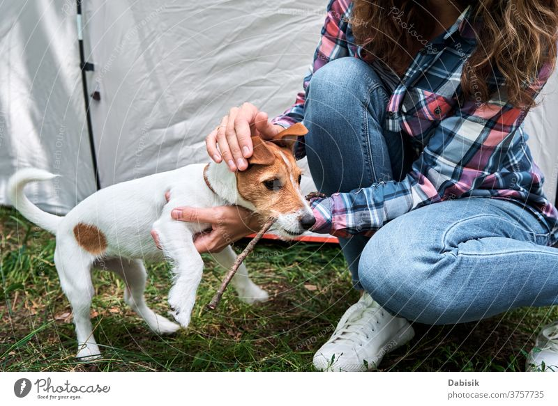 Woman with jack russell terrier puppy dog outdoors. Relationships and pet care concept owner happy animal cute friendship playing lifestyle fun grass young