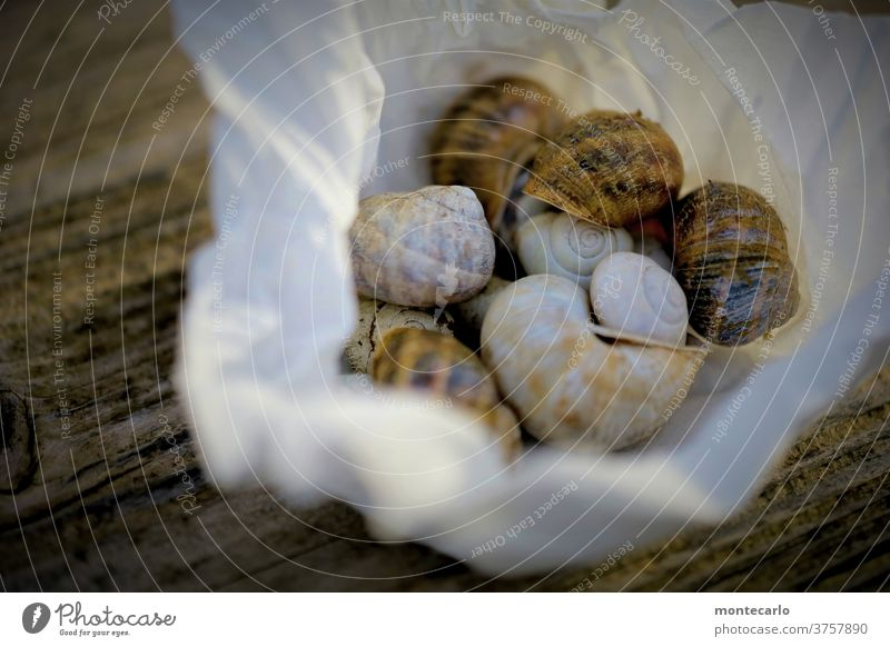 Collected empty snail shells in a cloth on woody ground Exterior shot Colour photo Crumpet Snail shell Animal Nature Environment Wood backing Warm light