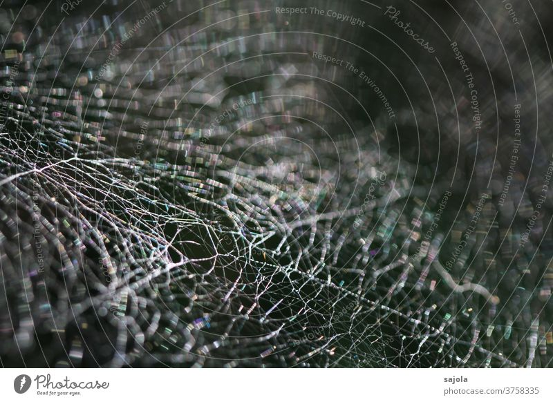 cross-linked Spider's web Net Spider threads Nature Exterior shot Close-up Macro (Extreme close-up) Shallow depth of field Network Pattern Structures and shapes