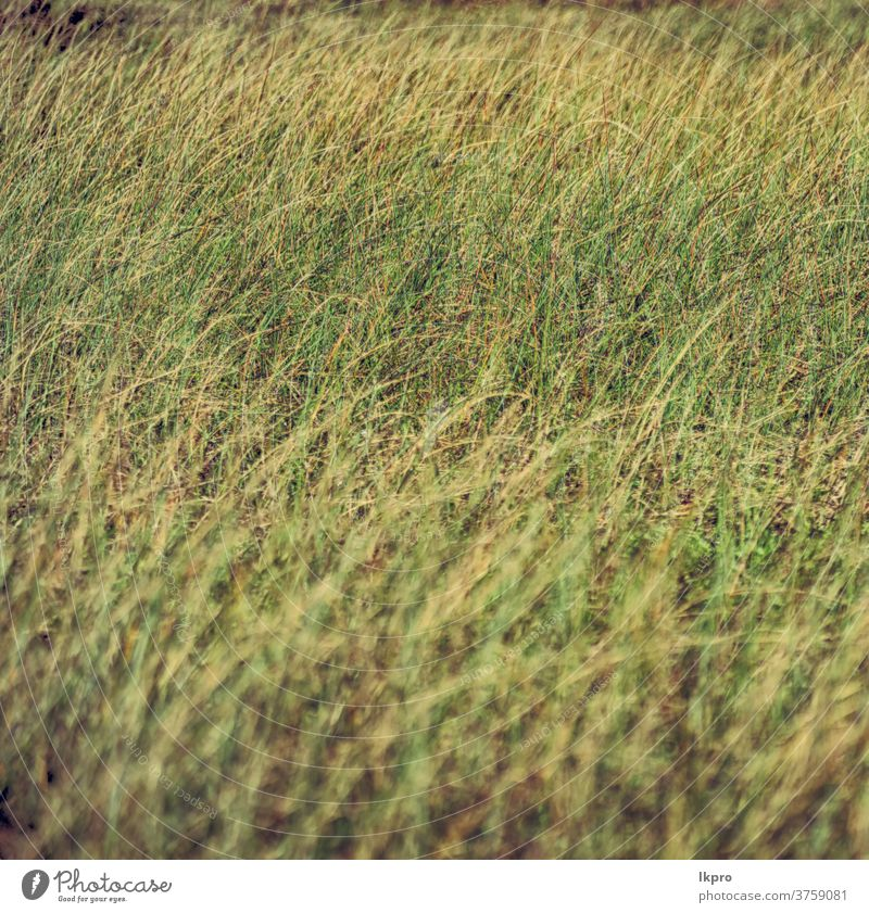blur   abstract grass like background dry yellow texture nature hay brown pattern natural field plant green summer backdrop autumn closeup environment gold dead