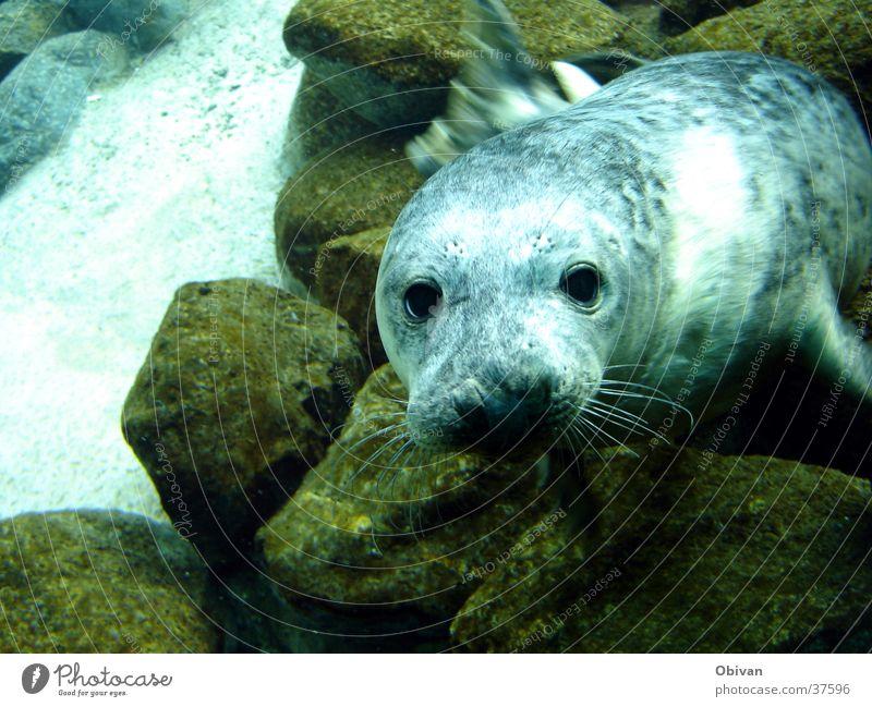 Blue Water Animal Stone Baby animal Rock Cute Animal face Aquarium Seals Harbour seal Seal cub