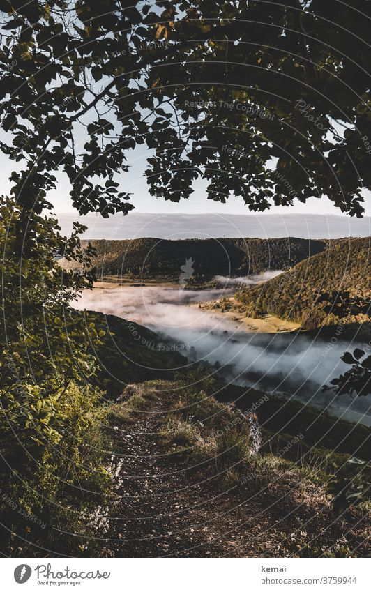 The view into the valley with fog Fog Morning fog early morning mist Light Shadow Spring Green Tree Forest Landscape Fresh Illuminate Nature Deserted