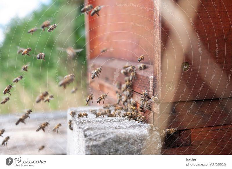 Beehive Bee Beehive Prey Flock flight Flying rave