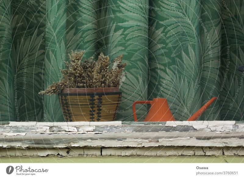 Window with dried up cactus, orange watering can and green curtain with floral pattern Drape Plant Pot plant Cactus Shriveled dead Watering can Curtain Old