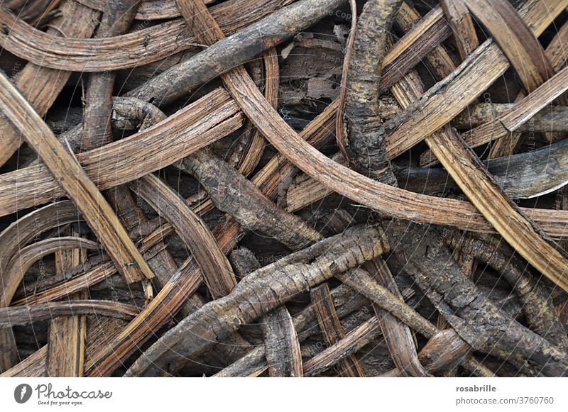 back to the roots | pattern from roots and wood Wood Pattern background naturally Nature wickerwork gobbled Devour noose wax Root Brown concept conceptually