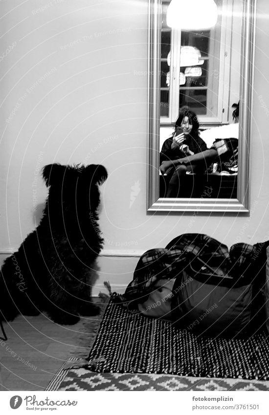 Selfie with dog of woman in front of mirror Man and dog Pet Self portrait dark season Dark Moody Winter mood Mirror Mirror image Lamp Dog Animal Communication