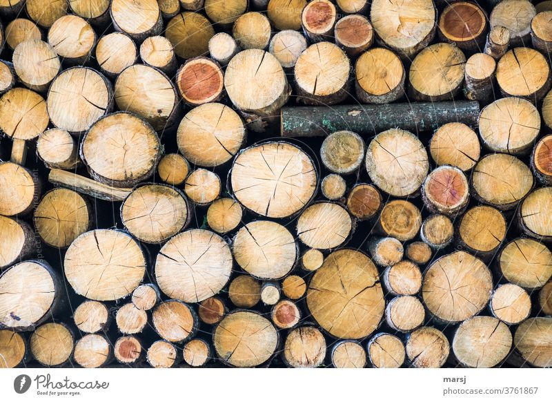 Someone has to step out of line in a pile of like-minded firewood. Stack co2 CO2-neutral Fuel Stack of wood Brown stacked Firewood Wood idyllically naturally