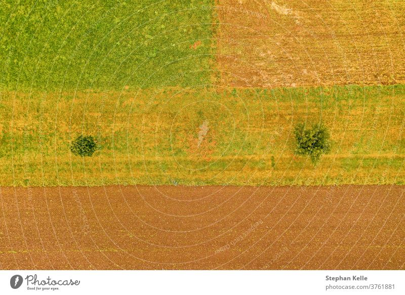 Aerial view top shot at a field with two trees, kind of minimalism, orange, natural background photo. aerial row meadows top view fields copyspace country