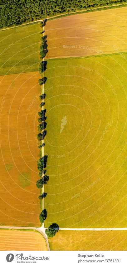 View from above over a straight line of trees, a beautiful avenue as top shot in summer. aerial row meadows top view germany fields country road flying flight
