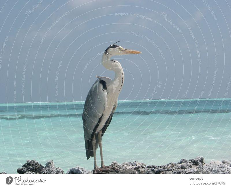 crane Crane Beach Ocean Maldives Summer Transport blue water