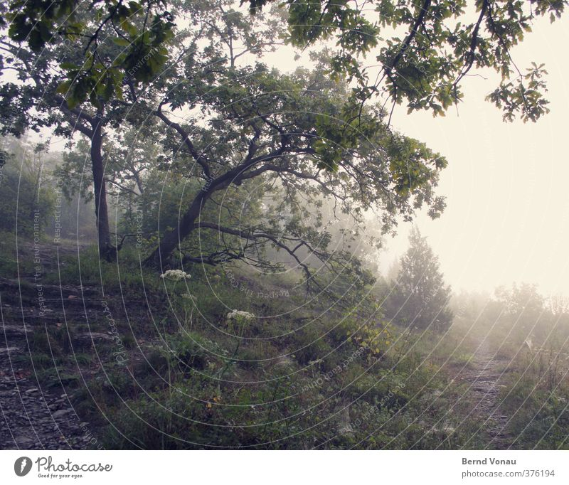Nature Green Tree Relaxation Calm Leaf Forest Yellow Grass Lanes & trails Going Moody Fog Hiking Bushes To enjoy