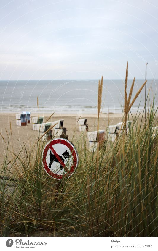 """Sign """"Dogs forbidden"""" is behind dune grass on the beach with beach chairs at the North Sea Beach sign dog prohibition Marram grass Ocean Island"""