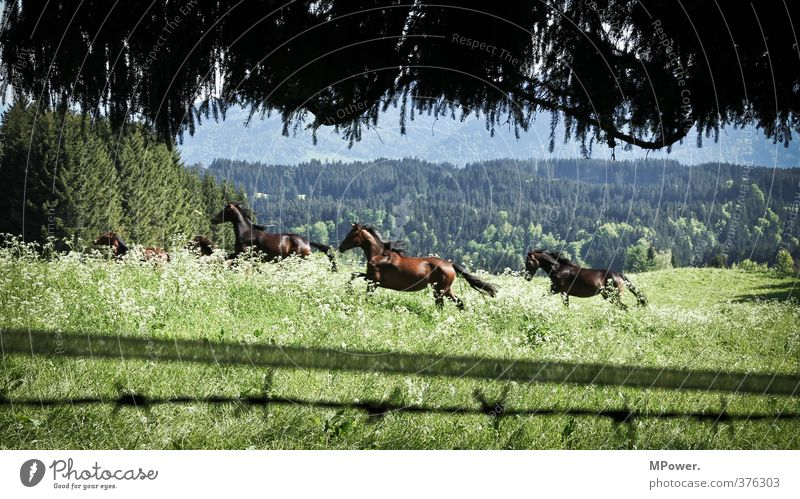 Green Beautiful Landscape Animal Forest Environment Meadow Brown Elegant Speed Esthetic Group of animals Alps Horse Pasture Strong