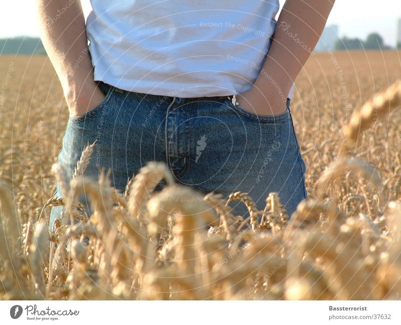 Man Summer Jeans Grain Cornfield