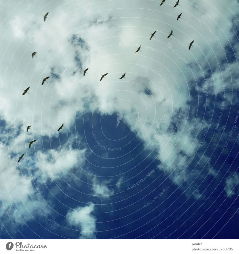 trip Freedom Flying Nature Environment Air Ease Elegant Trip Poultry Blue Sky Clouds Movement Far-off places Wanderlust Together Contentment luck To enjoy