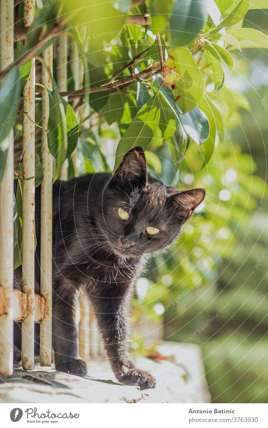 Small black cat squeezing through a white fence on a wall, surrounded by green leaves. Trying to reach the camera to inspect it outdoor bars tiny baby attention