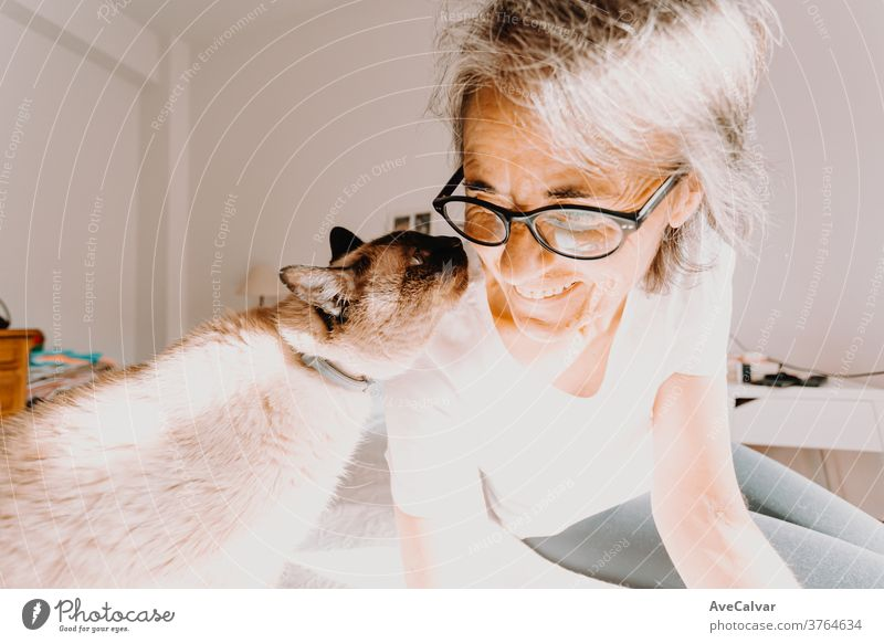 Old woman with glasses smiling and kissing his cat on his bedroom during a super bright day person pet friendship one person togetherness happiness senior adult