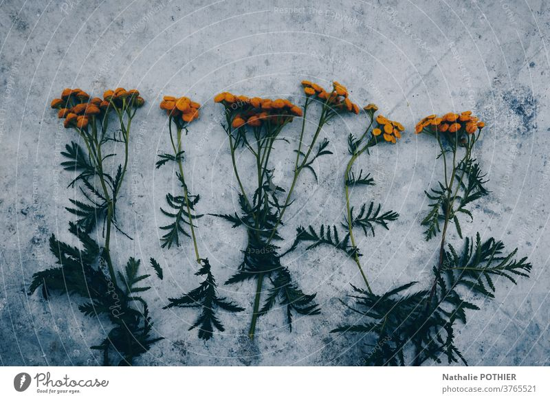 Orange flowers lined up on a concrete background daisy green orange design aligned beautiful blossom decoration floral modern repeat daisies summer plant spring