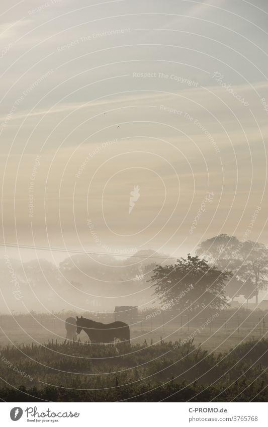 Paddock in morning fog horses Horse Fog Misty atmosphere Shroud of fog Trees on the horizon Electricity pylon Clouds Morning fog