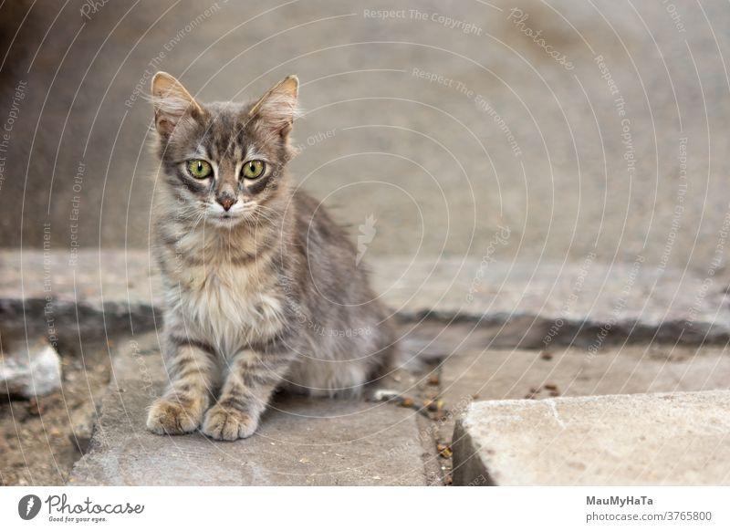 Street small cat street robber paws mustache sidewalk city portrait animal mammal