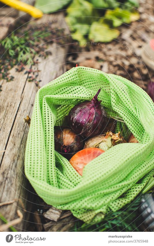 Urban Gardening harvest fresh bio onions agriculture Bio bloom breed breeding childhood conservatory controlled farming crop cultivation food from hand to mouth