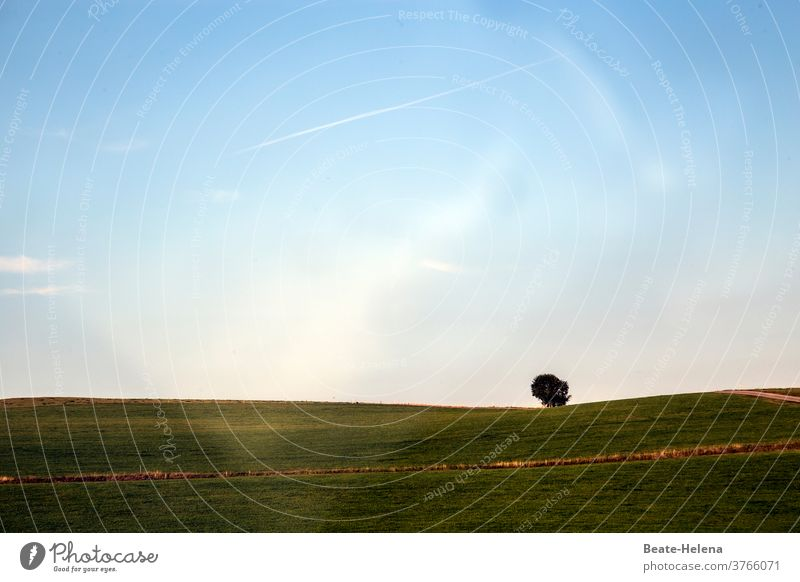 Alone tree on hilly open space in evening light spreads calmness evening mood Landscape Tree Being alone Light peace Sky Exterior shot Deserted Dusk Sunlight