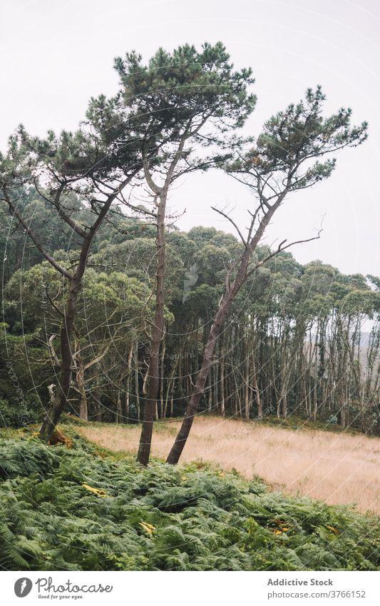 Empty beach with green plants in stormy weather sea seashore overcast gloomy coast wave landscape asturias spain frejulfe beach nature ocean cloudy travel