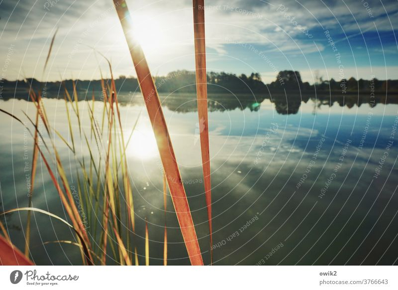 Lines in the landscape wide Calm Beautiful weather Cloudless sky Horizon stalks Surface of water Plant Sunlight Reflection Landscape Lakeside Panorama (View)