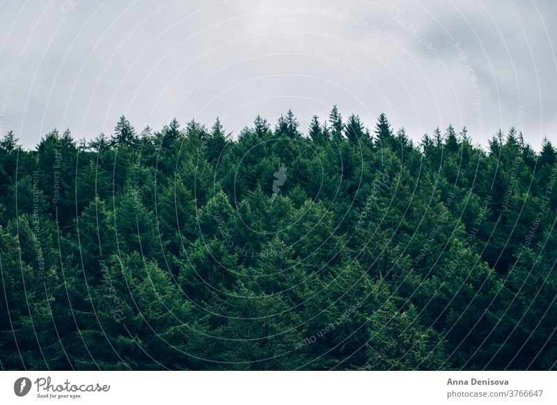 Dark forest during summer landscape tree nature environment outdoor natural woods green season moody mist scenic scenery pine park fir woodland travel fantasy