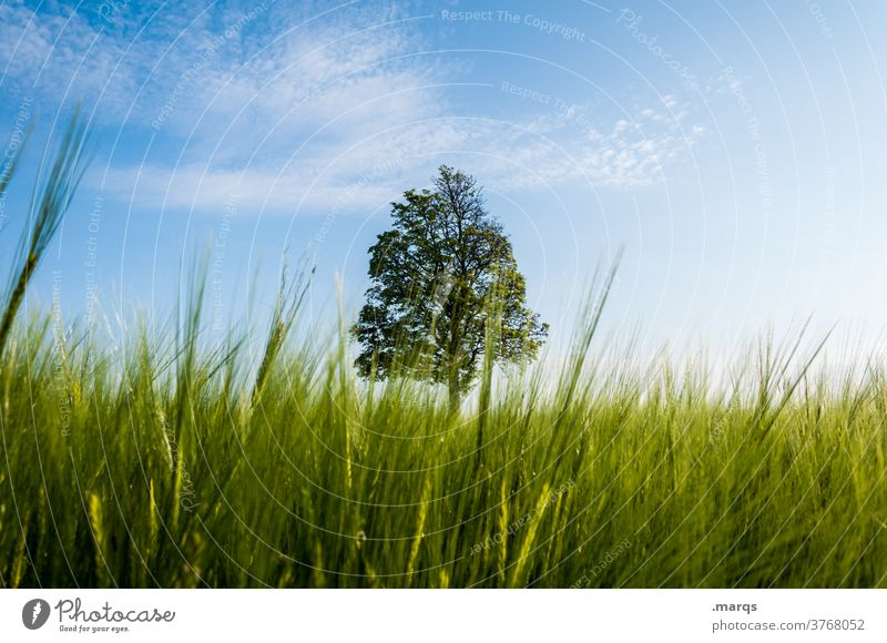 tree Tree Meadow Perspective Grass Beautiful weather 1 Nature Environment loner Summer Field