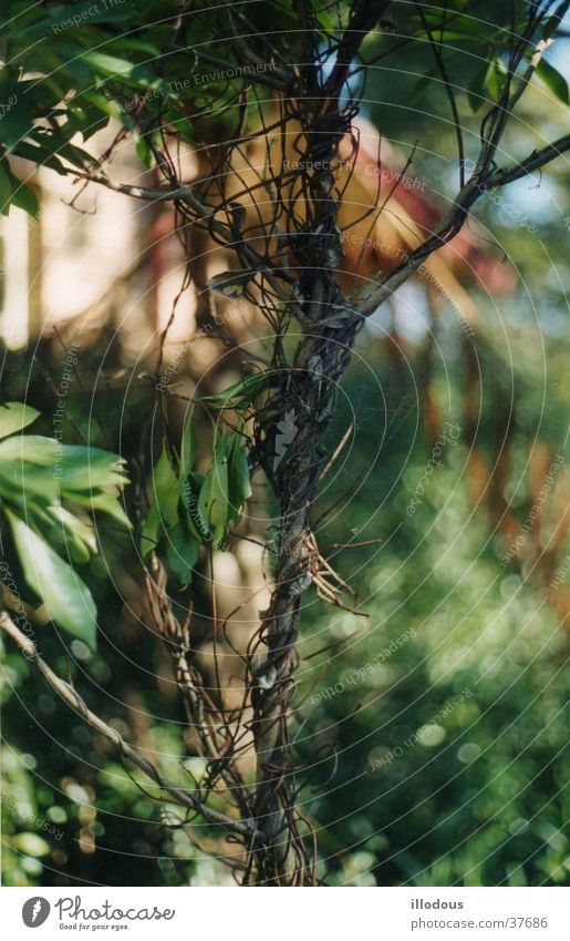 Entwine Nature