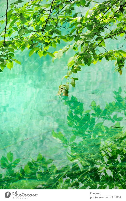 Obersee / Detail Environment Nature Landscape Plant Water Tree Leaf Foliage plant Wild plant Forest Alps Lakeside Green Deciduous tree Reflection