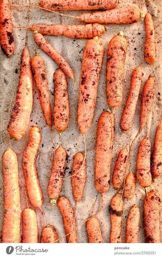 lebensnotwendig | vitamine Karotten Vitamine Ernte Sand Miete Erdmiete Sandmiete orange Beta-Karotin Möhren lagern Gemüse