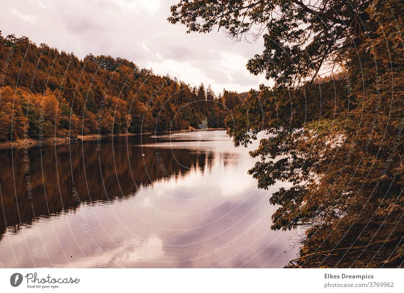 Autumn at the Perlenbach dam in the Eifel perlenbachtalsperre Water reflection Landscape