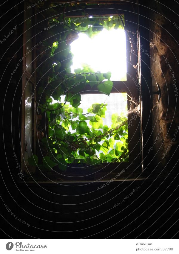 ray of hope Window Light Plant Nature Detail Vacation & Travel
