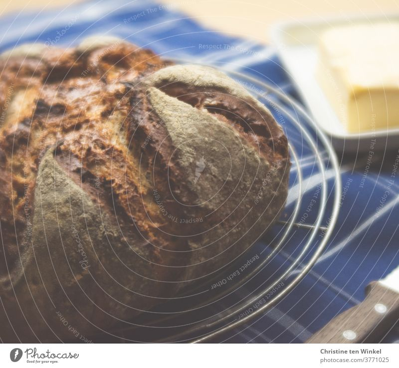 ...vital, our daily bread...   freshly baked bread lies on a cooling grid loaf fresh bread Bread homemade Fresh Delicious fragrant bread and butter Food