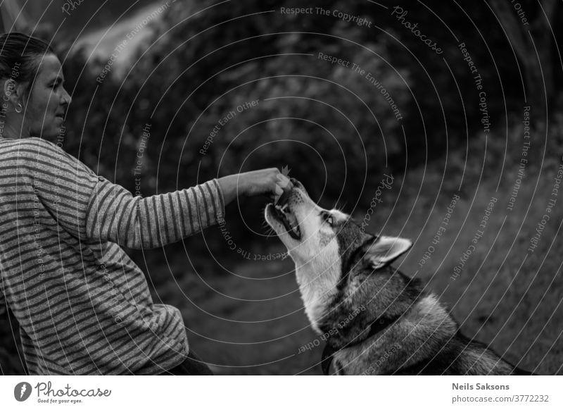 woman giving husky dog a snack siberian husky alusky animal feeding treat hand Exterior shot Sled dog Animal portrait Pet young Day Purebred dog Looking Head