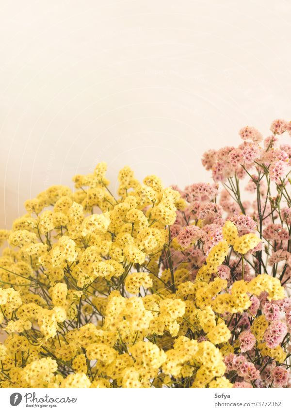 Dried pink and yellow flowers in white vase autumn dried interior season bouquet arrangement decor home natural thanksgiving wall color fall colorful mute
