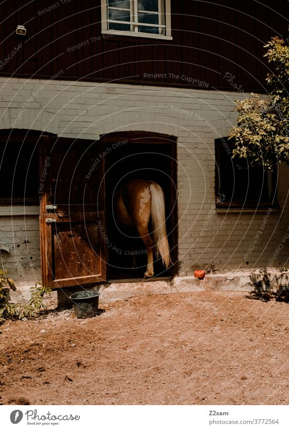 Horse sees in the stable Barn Stable Country life country Ride riding horse Goal door House (Residential Structure) Summer Sun Warmth behind Hind quarters Tails