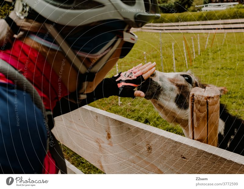 Cyclist strokes donkey in a petting zoo cyclists bike tour Woman feminine Girl Trip Nature Meadow Petting zoo Animal Donkey Love Affection fond of animals