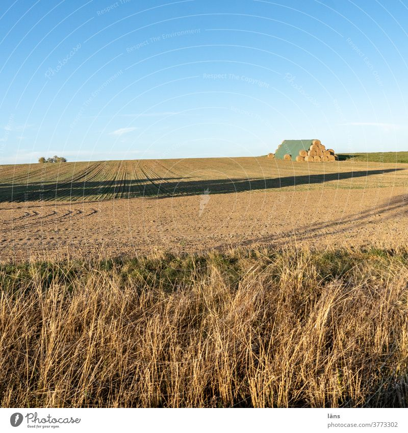 Agriculture l vital Harvest Roll of straw Bale of straw Field Deserted Grain Exterior shot Straw Horizon Beautiful weather