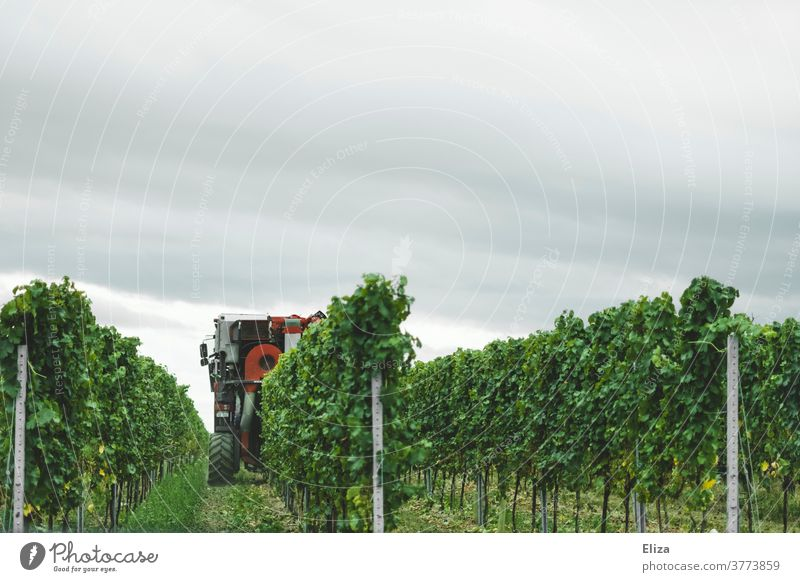 A grape harvester during the grape harvest in the Palatinate Harvester Grape harvest vine palatinate wine region reap Grape Harvester fruit harvester