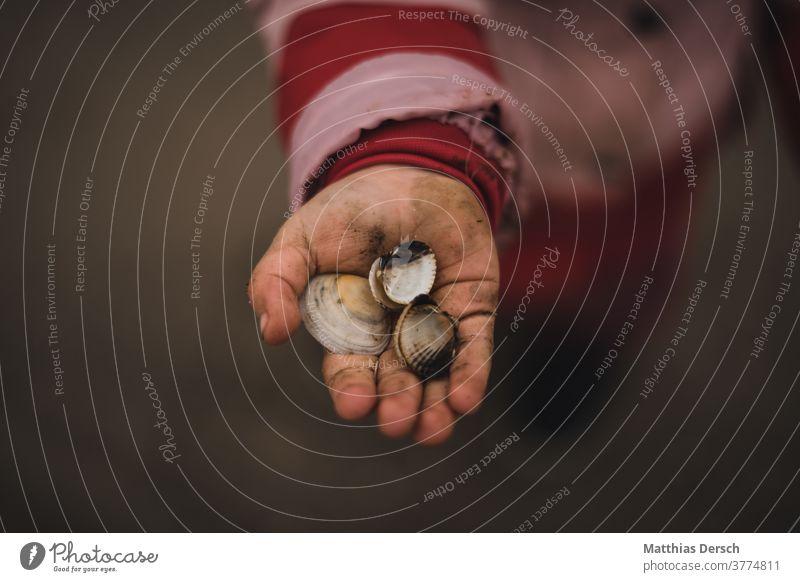 Child's hand with shell by hand Mussel seashells shell beach Mud flats watt Walk along the tideland North Sea North Sea coast North Sea beach North Sea holiday