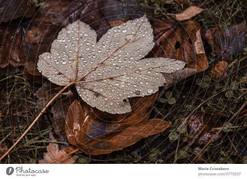 Morning dew on fallen autumn leaves morning dew dark and moody fall season no people design asset fallen leaves textured botany macro outdoors drops closeup