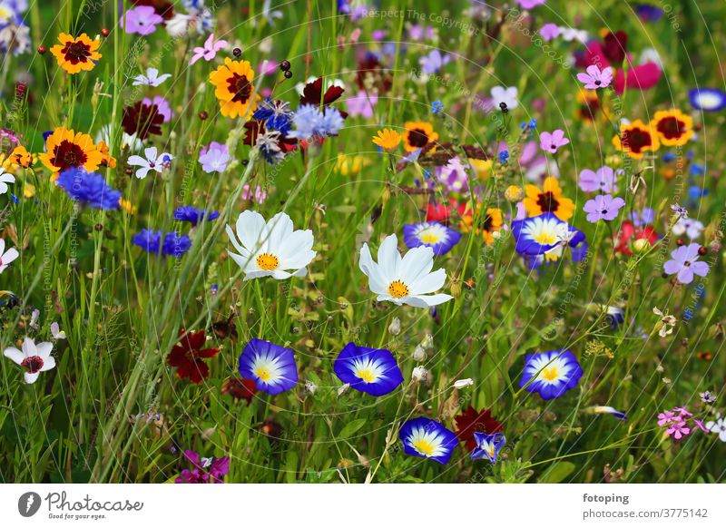 Colourful flower meadow in the basic colour green with various wild flowers. flaked Flower field Flower meadow Meadow little flowers bleed Botany flora Grass