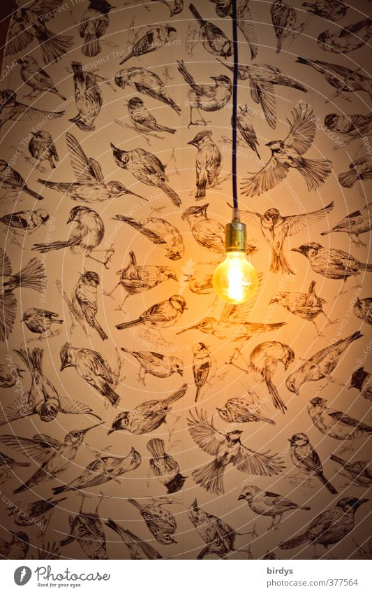 "ambience Lifestyle Illuminate Esthetic Dark Modest Design Idea Creativity Style ""Lamp Light Electric bulb enlightenment Bird birds Wallpaper Bright spot Idea,"""