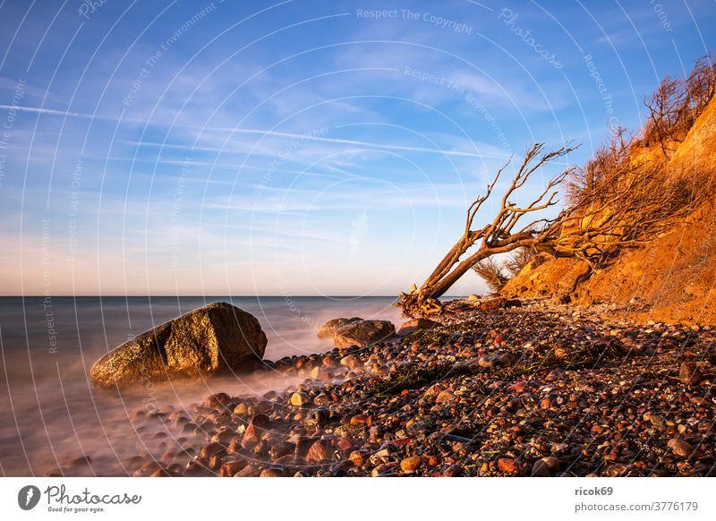 In the evening at the Baltic Sea coast near Wustrow Tree trunk steep coast fischland-darß Mecklenburg-Western Pomerania Ocean Beach Coast Baltic coast Water