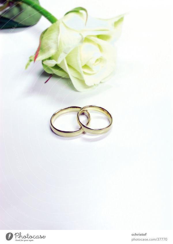 White Love Flower Ring Wedding Rose Jewellery Valentine's Day Festive Wedding band