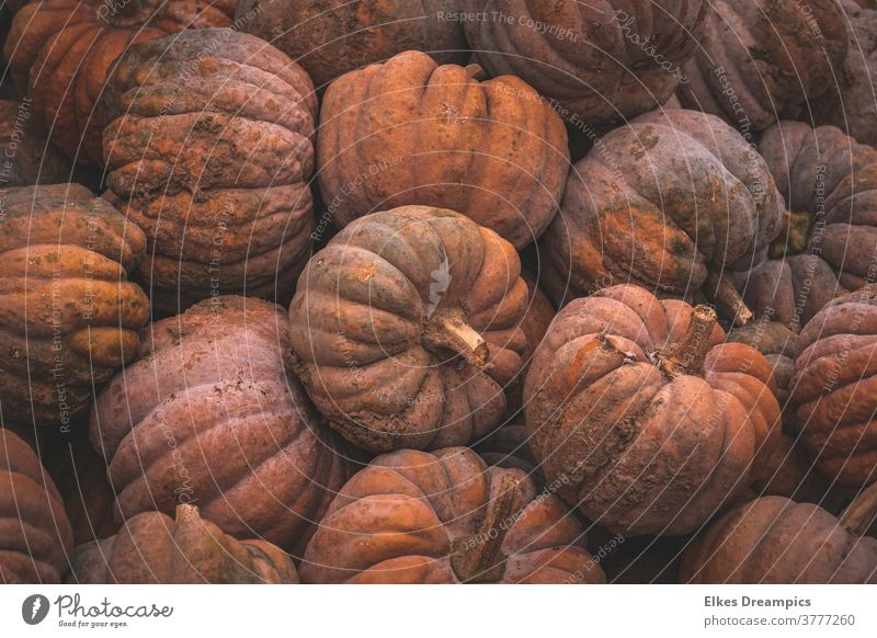 Many pumpkins in a pile Autumn Vegetable Harvest salubriously